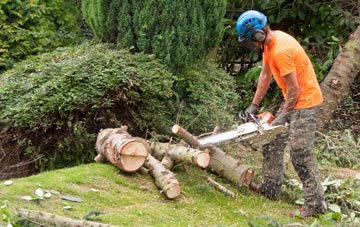 additional services offered by Tonbridge tree surgeons